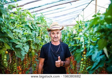 Portrait Of Confident Male Gardener Standing With Thumbs Up At Greenhouse