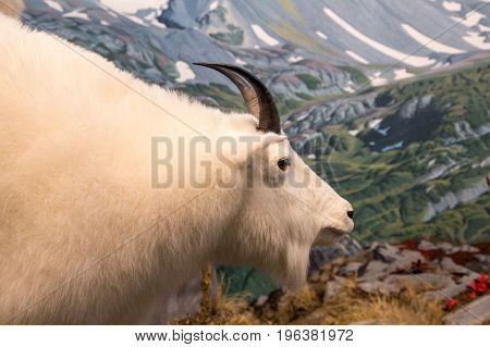 A Horned White Ram Over the Mountains