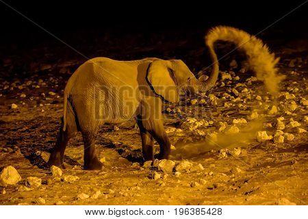 African elephant having as night time dust bath