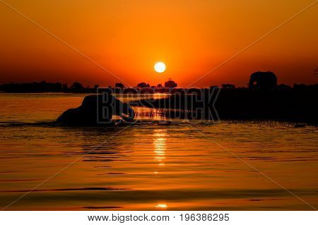 African safari sunset on the Chobe river