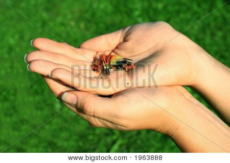 Hands With Seeds