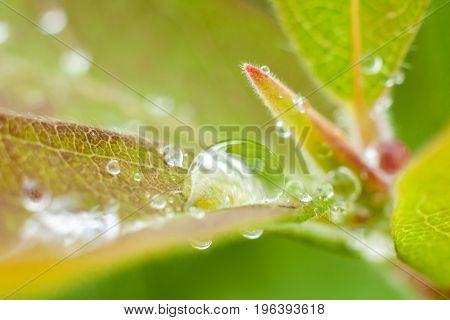 Beautiful fresh leaves with water drops macro