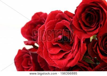 Red roses bouquet isolated on white background.