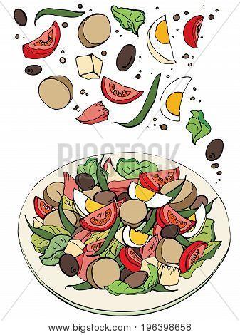 Fresh salad, organic food, vegetables. Hand drawn sketch of fresh salad.