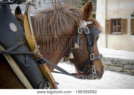 horse in sils during winter in switzerland