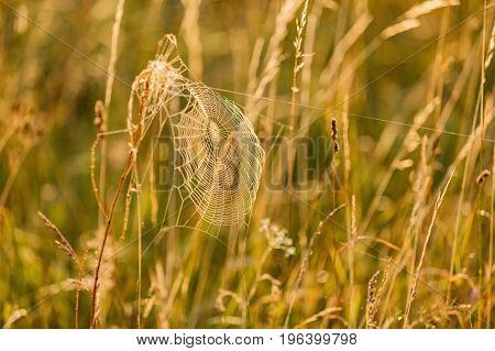 Cobwebs in the grass cobweb dew drop of water south Bohemia landscape