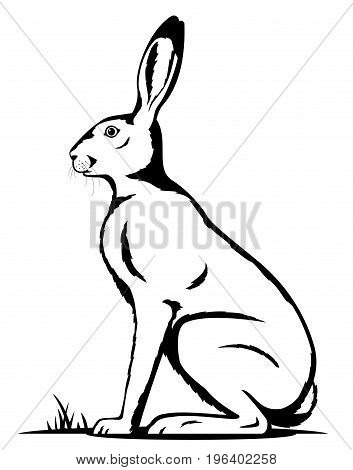 One big adult hare sitting on the ground on side view in black and white color, isolated