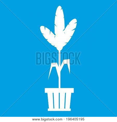 Decoration plant on pot in simple style isolated on white background vector illustration