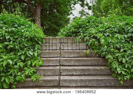 Stairs overgrown with grapevine in a public park
