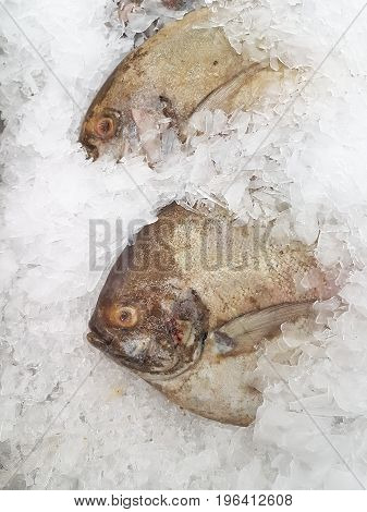 fresh black pomfret on ice at the seafood booth