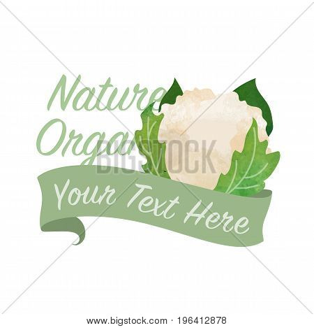 Colorful Watercolor Texture Vector Nature Organic Vegetable Banner Cauliflower