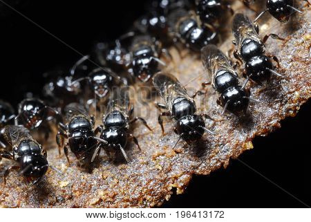 Small bees tending their hive at night