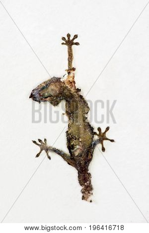 Dead lizard (Hemidactylus) hanging on a wall