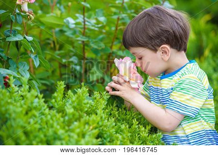 A portrait of a boy smiling and smelling a rose on warm summer day. Adorable kid hold rose in his hands and looking on it. Leisure with children outdoors.