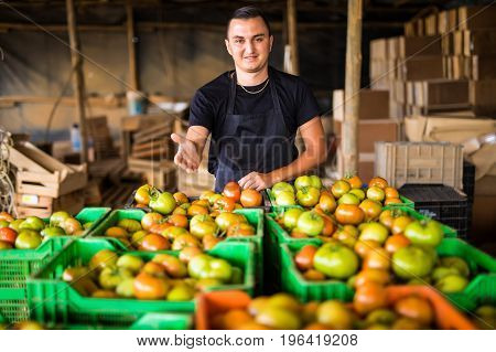 Happy Organic Farmer Man With Crossed Hands Over Tomatoes Boxes Harvest  In A Greenhouse