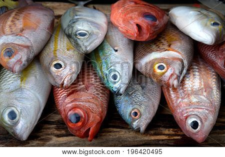 Mix Colorful Fresh Fishes