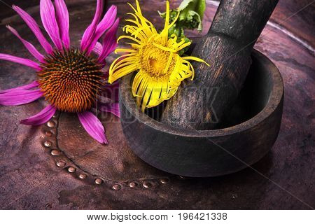 Inflorescence Of Medicinal Elecampane