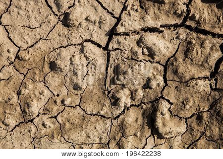 A dry dark ground with big cracks