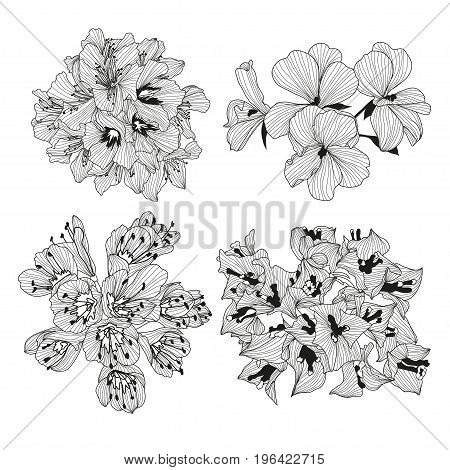 Elegant decorative bougainvillea flowers design element. Floral branch. Floral decoration for vintage wedding invitations greeting cards banners. poster