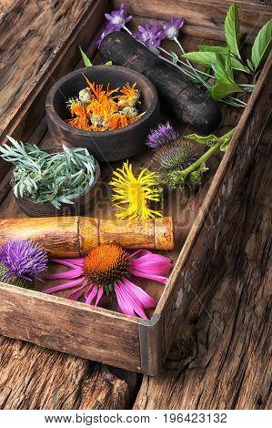 Group Healthy Herbs