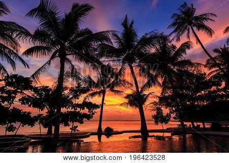 Dramatic Sunset With Silhouettes Palm In Thailand