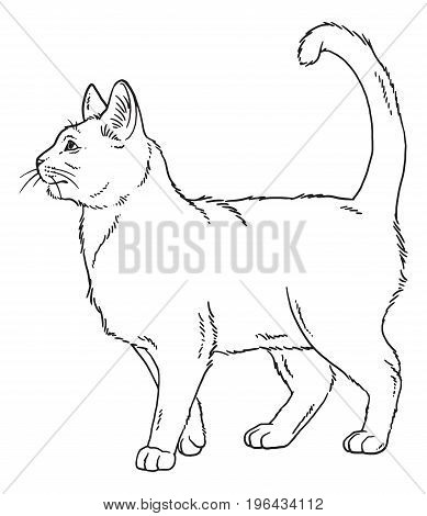 Vector outline sketch of a standing cat.