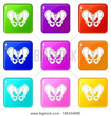 Pelvis icons of 9 color set isolated vector illustration