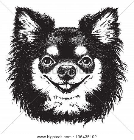 Black and white vector sketch of a cute long haired Chihuahua's face.
