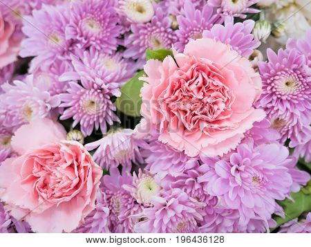 beautiful exclusion integrity elegance pink pastel color flowers