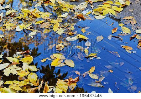Yellow and orange fallen leaves in the autumn puddle reflecting sky and clouds