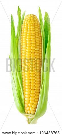 Isolated Corn Ear