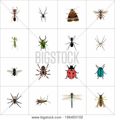 Realistic Wasp, Ladybird, Locust And Other Vector Elements