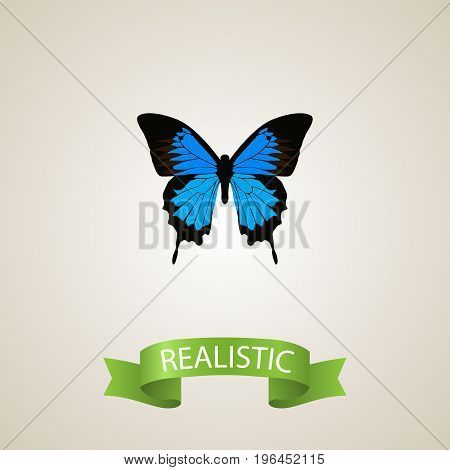 Realistic Polyommatus Icarus Element. Vector Illustration Of Realistic Common Blue Isolated On Clean Background