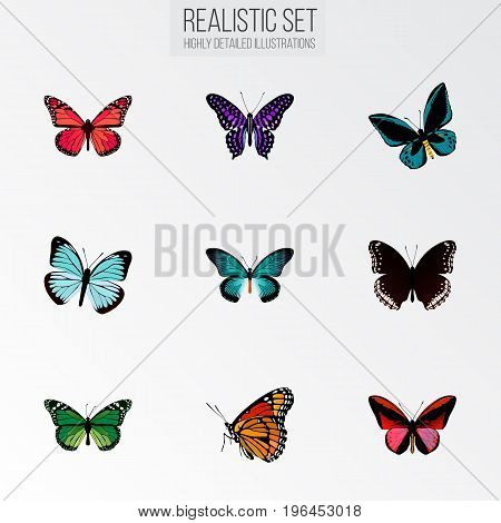 Realistic Milkweed, Polyommatus Icarus, Spicebush And Other Vector Elements