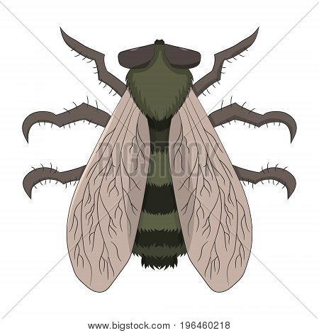 Big fly. The Tabanus. Vector illustration. Drawing by hand