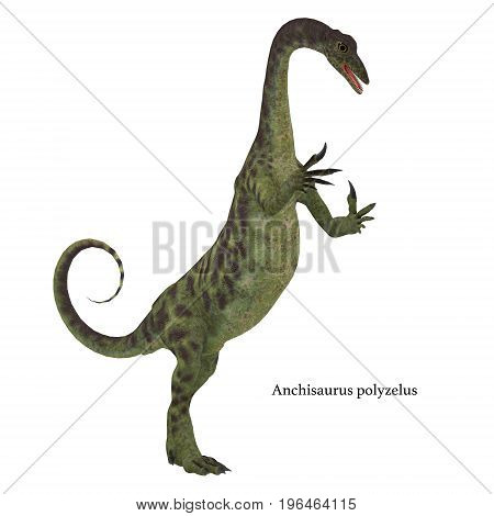 Anchisaurus Dinosaur on White with Font 3d illustration - Anchisaurus was a omnivorous prosauropod dinosaur that lived in the Jurassic Periods of North America Europe and Africa.