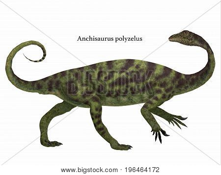 Anchisaurus Dinosaur Side Profile with Font 3d illustration - Anchisaurus was a omnivorous prosauropod dinosaur that lived in the Jurassic Periods of North America Europe and Africa. poster