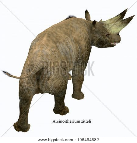 Arsinoitherium Mammal Tail with Font 3d illustration - Arsinoitherium was a herbivorous rhinoceros-like mammal that lived in Africa in the Early Oligocene Period.