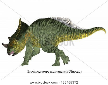 Brachyceratops Dinosaur Tail with Font 3d illustration - Brachyceratops is a herbivorous Ceratopsian dinosaur that lived in Alberta Canada and Montana USA in the Cretaceous Period.