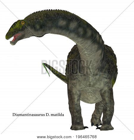 Diamantinasaurus Dinosaur on White with Font 3d illustration - Diamantinasaurus was a herbivorous sauropod dinosaur that lived in Australia during the Cretaceous Period.