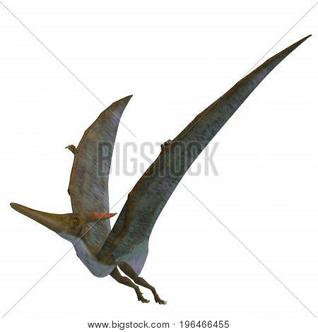 Pteranodon Reptile Wings Up 3d illustration - Pteranodon was a flying carnivorous reptile that lived in North America in the Cretaceous Period.