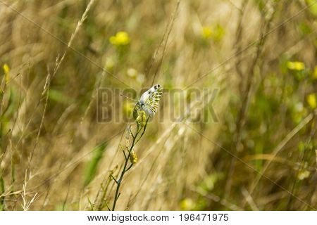 butterfly on fields close up composition photograph