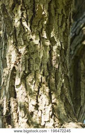 tree texture close up composition photograph idea