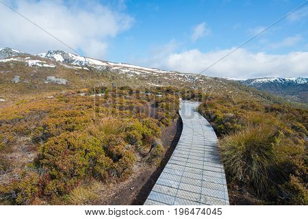 Board walk to the nature in Cradle mountain national park, Tasmania.