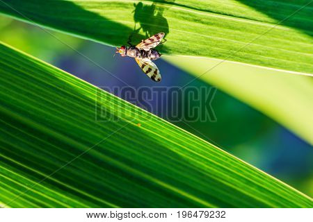 Summer landscape. Insect fly sits on a green blade of grass, closeup,