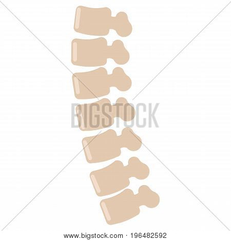 Human spine icon, vector illustration flat style design isolated on white. Colorful graphics
