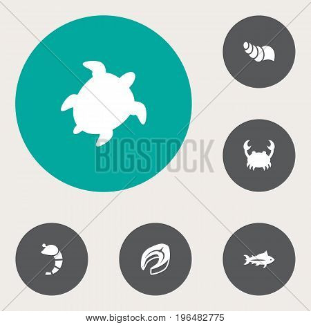 Set Of 6 Sea Icons Set. Collection Of Tortoise, Sink, Beefsteak And Other Elements.