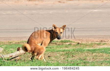 stay dog excrete on green grass beside country road in morning