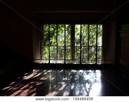 Window with Light Reflection on Floor and Growing Weed in Backlight