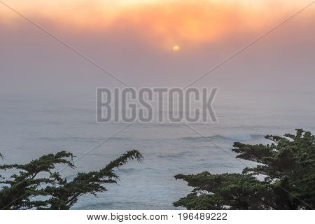 Pacific Ocean Foggy Sunset With Cypress Trees. Moss Beach, San Mateo County, California, USA.